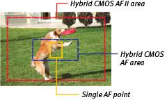 Hybrid AF system screen