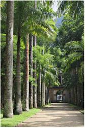 Driveway, palm trees