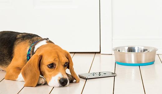 Perro en el suelo junto a un teléfono celular.